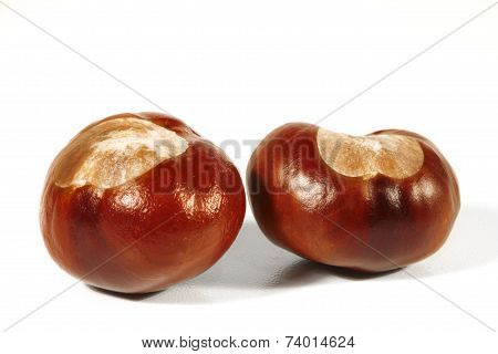 Horse-chestnut On A White Background