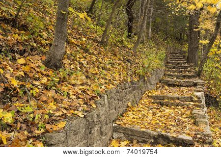Stone Steps In Woods Breezy