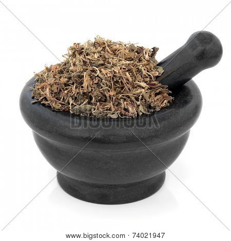 Gentian herb, used in chinese herbal medicine in a marble mortar with pestle over white background. Di ding. Gentiana loureiroi.
