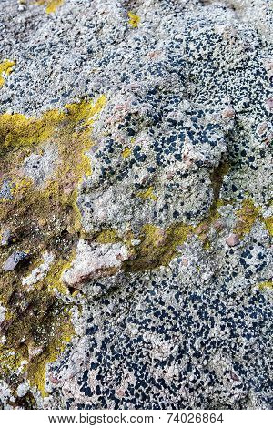 Mold Surface Of A Stone