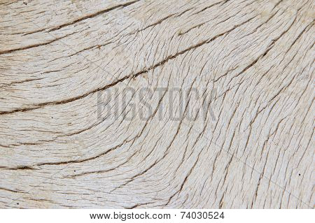 Bone Texture and Background - Solid Natural Surface