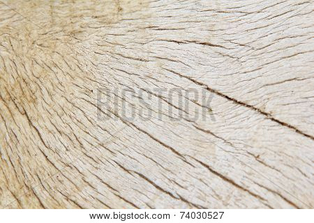 Bone Texture and Background - Natural Surface