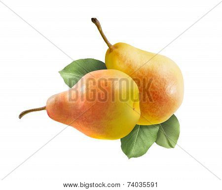 Two Whole Comice Pears Isolated On White
