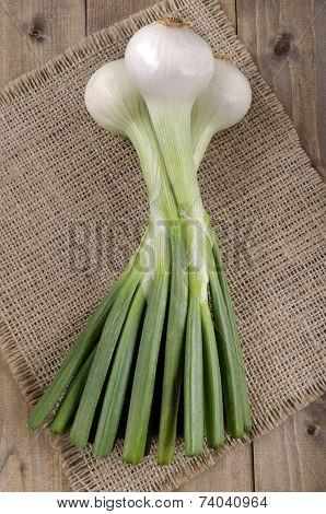 Jumbo Spring Onions On Brown Jute