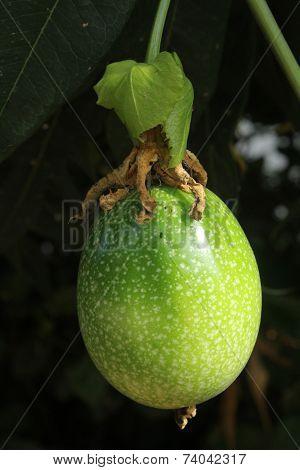 Unripe Passionfruit