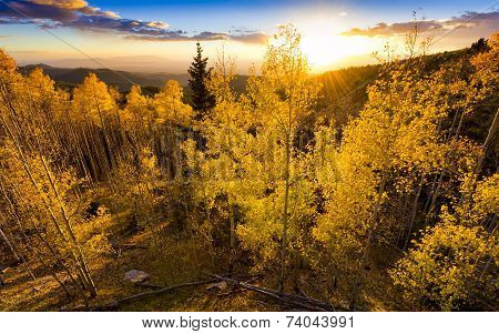 Golden Aspen Sunset