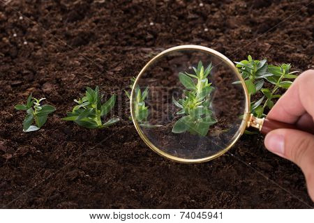 Inspecting Sapling With Magnifying Glass