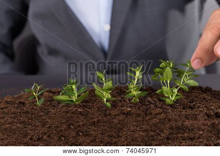 Businessman Growing Green Saplings