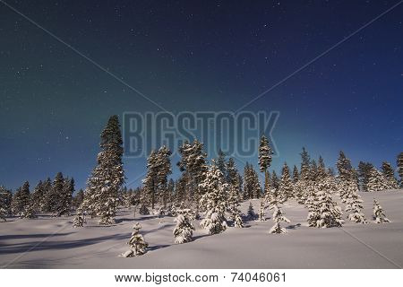 Beautiful Northern Lights Over Snowy Forest And Snow-covered Trees