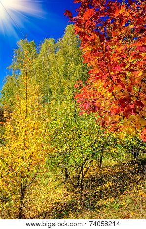 Vibrant Autumnal Grove.