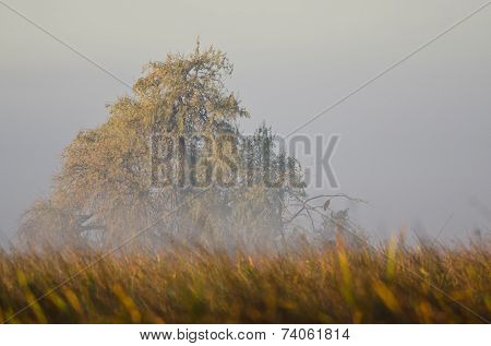 Autumn On A Foggy Silent Morning In The Marsh