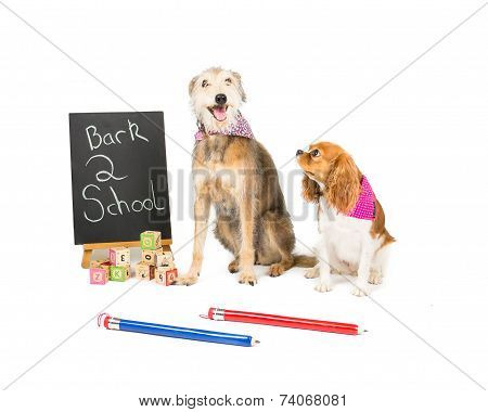 lurcher and a King Charles Spaniel go back to school