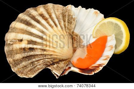 Raw King Scallop Clam