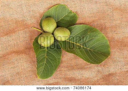 Three Green Nuts