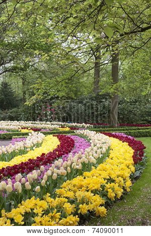 Dutch tulips in the spring.