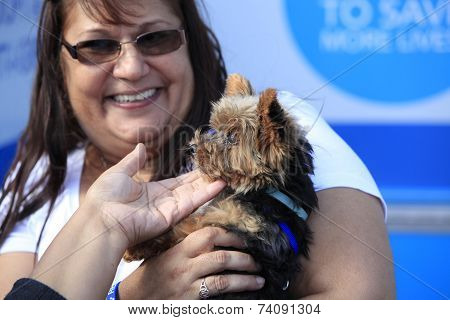 Volunteer with Yorkie pup