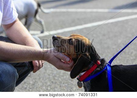 Sweet beagle mix