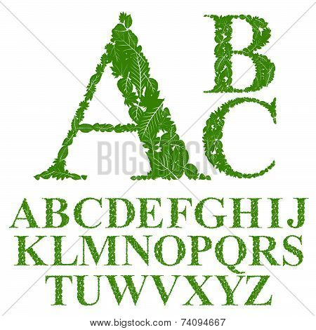 Font made with leaves, floral alphabet letters set, flowery design.