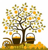 foto of hand-barrow  - vector apple tree - JPG