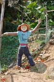 picture of lantau island  - Vegetable garden with a scarecrow at Lantau island Hong Kong - JPG