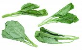 foto of kale  - Chinese kale vegetable on white background - JPG