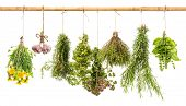 stock photo of oregano  - hanging bunches of fresh spicy herbs isolated on white background - JPG