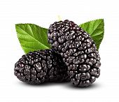 foto of mulberry  - Fresh black mulberry on a white background - JPG