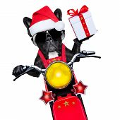 foto of crazy hat  - santa claus dog on motorbike bringing presents or gifts to everyone - JPG