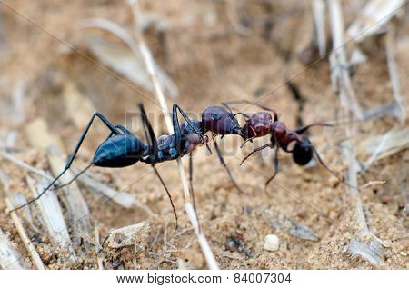 Wildlife - Ants