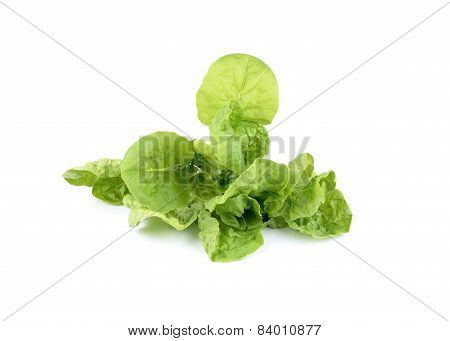 Fresh Chinese Cabbage (romain Lettuce) On White Background