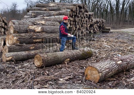Lumberjack With Laptop