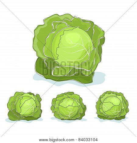 White cabbage vegetable on a white background