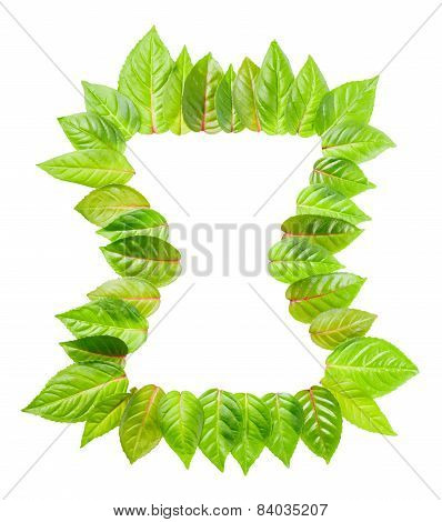 Concept Time Of Frame Of Fresh Green Leaves Is Isolated On White Background