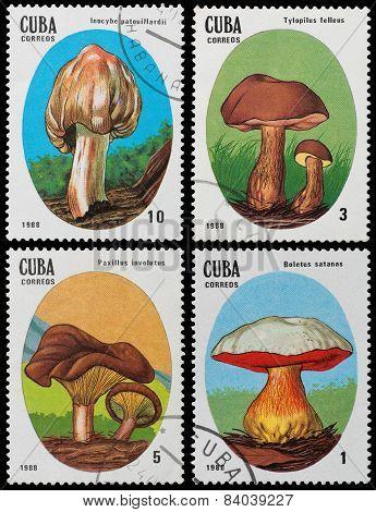 Poisonous Wild Mushrooms
