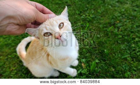 Hand Petting A Cat (16:9 Aspect Ratio)