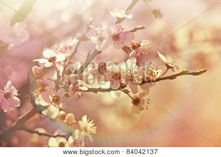Blooming - flowering tree