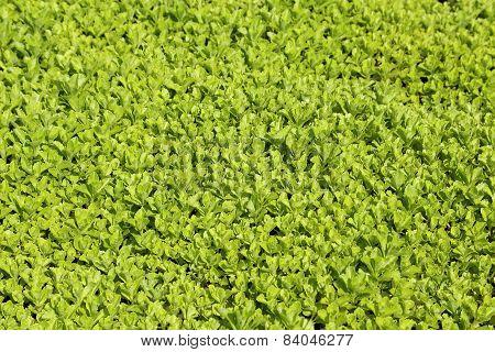 Green Background.