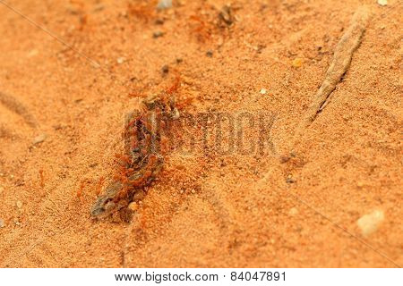 Ants Nest With Soil At The Park