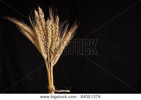 Wheat And Barley