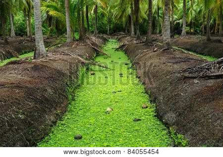 The Channel Of Coconut Garden In Thailand