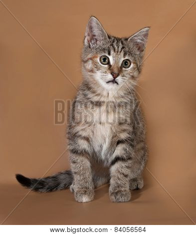 Tricolor Kitten Sitting On Brown