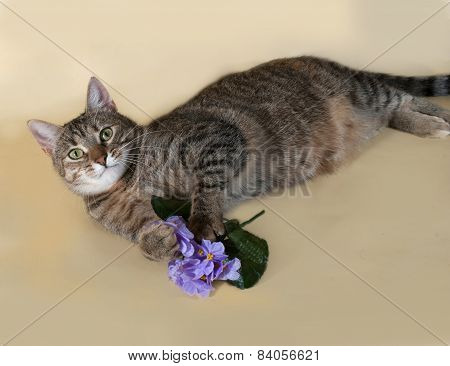Tabby Cat With Bouquet Of Purple Flowers Lying  On Yellow