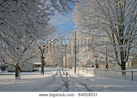 Snow in the Neighborhood