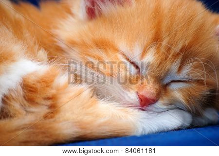 Red Kitten Is Sleeping