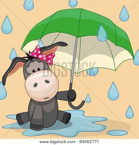Donkey With Umbrella