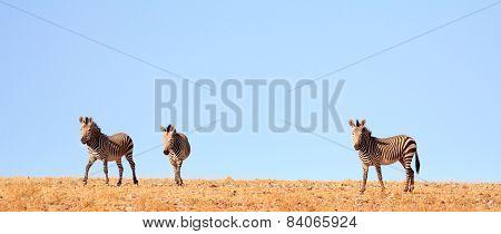 Zebras on the horizon in Damaraland