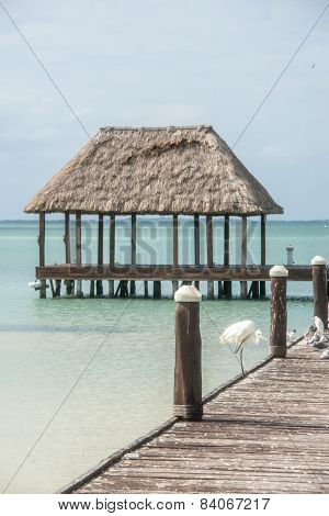 Wooden And Hut Palapa Pier With Segals And Birds Holbox, Tropical Island, Caribbean, Cancun. Traveli