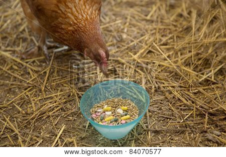 Curious Hen And Pills