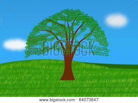 Oak Tree In A Meadow
