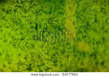 Macro Texture Of Wheat Grass Juice